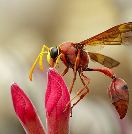 Beautiful macro shot of a wasp perching on a flower petal