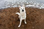 White dog next to the water-Focal length tips | Adobe