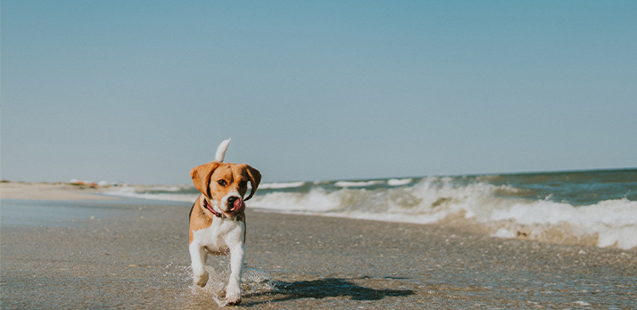 Capturing a puppy, the surf, and the ocean stretching to the horizon