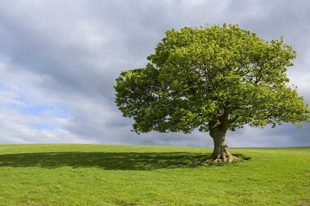 How To Draw A Tree A Step By Step Tutorial Adobe