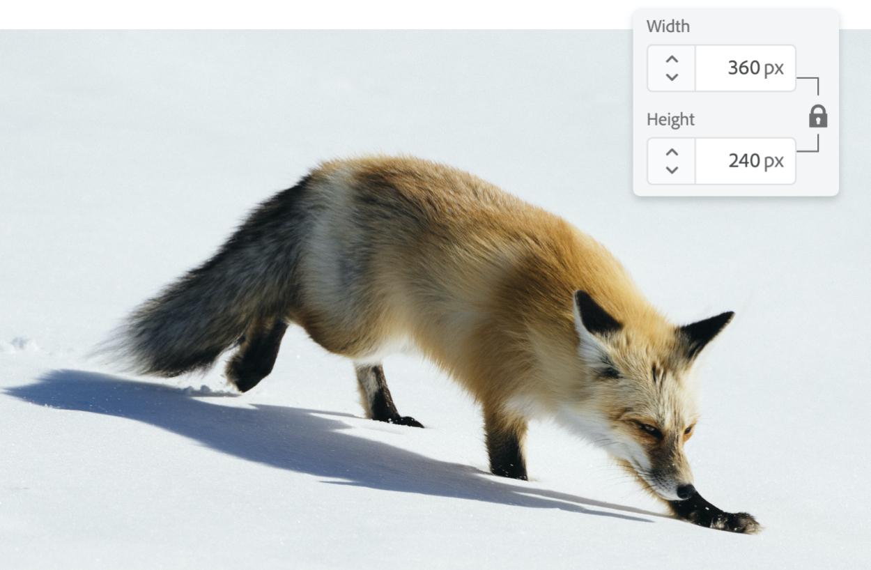 أداة تكبير الصور عبر الإنترنت المجانية Adobe Photoshop Express